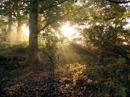 hajnal az erdőben
